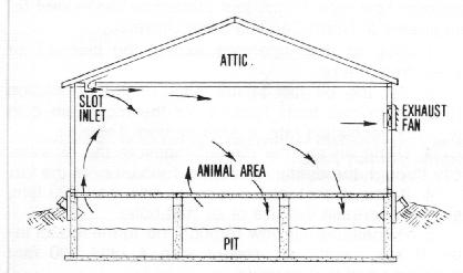AE-98 Natural Farrowing House Plans on amish hen house plans, farrow house plans, machine shed plans, farmhouse house plans, hog building plans, small stone house plans, printable dog house plans, sow house plans, indoor rabbit house plans, swine house plans, guinea hen house plans, brooder house plans, home house plans, pig stalls plans, meat house plans, drawing house plans, quail house plans, hog house plans, shelter house plans, duck house plans,