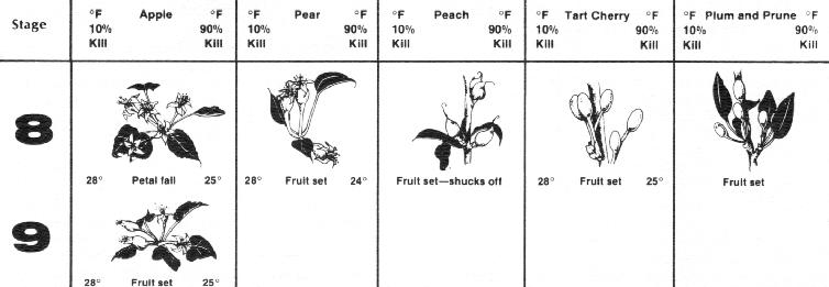 Different Developmental Stages In Plants And Fruits Of Manual Guide